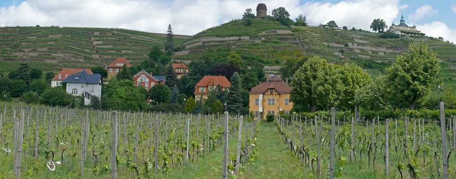Vineyards near Radebeul